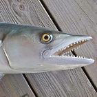 kingfish-altamar.jpg