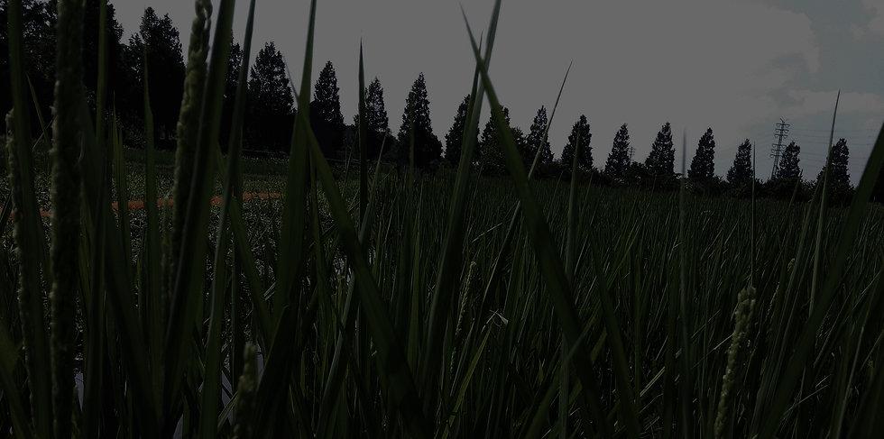 Gyokuso玉箒_story.jpg