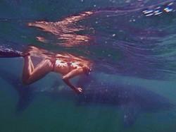 Nado con tiburon ballena