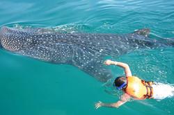 Buceo - Snorkel