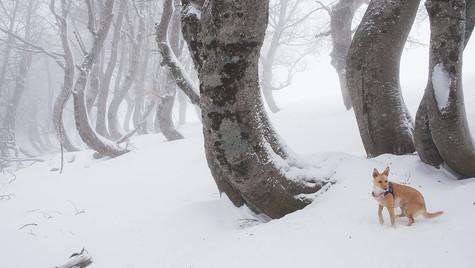 Jacci di Verre - Monti della Laga