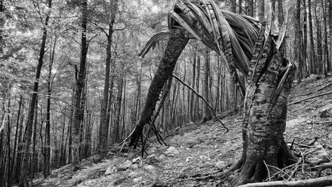 Sentiero dei 4 Vadi - Monte Tremoggia