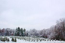 School Forest.JPG