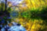 Glen Helen | Creek Waters | Fall
