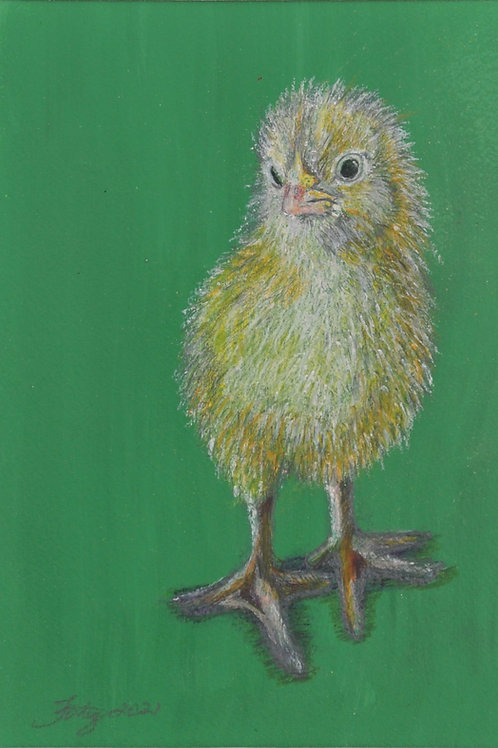 Spring Chick Drawing