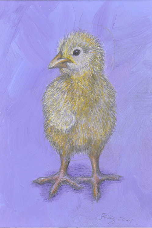 Cheeky Chick Drawing