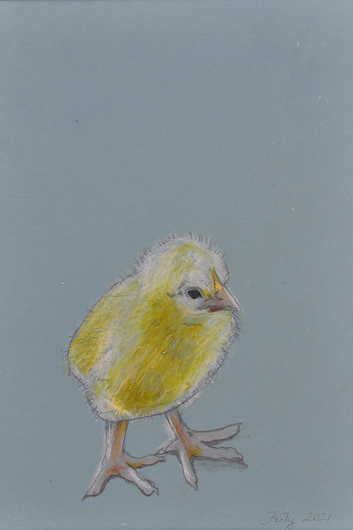 Baby Blue Chick Drawing