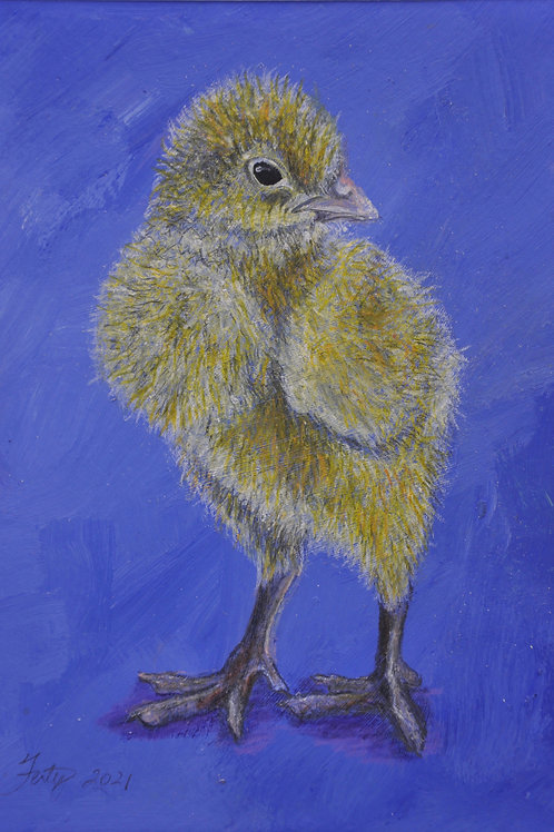 Cozy Baby Chick Drawing