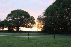bv scene sunset in field
