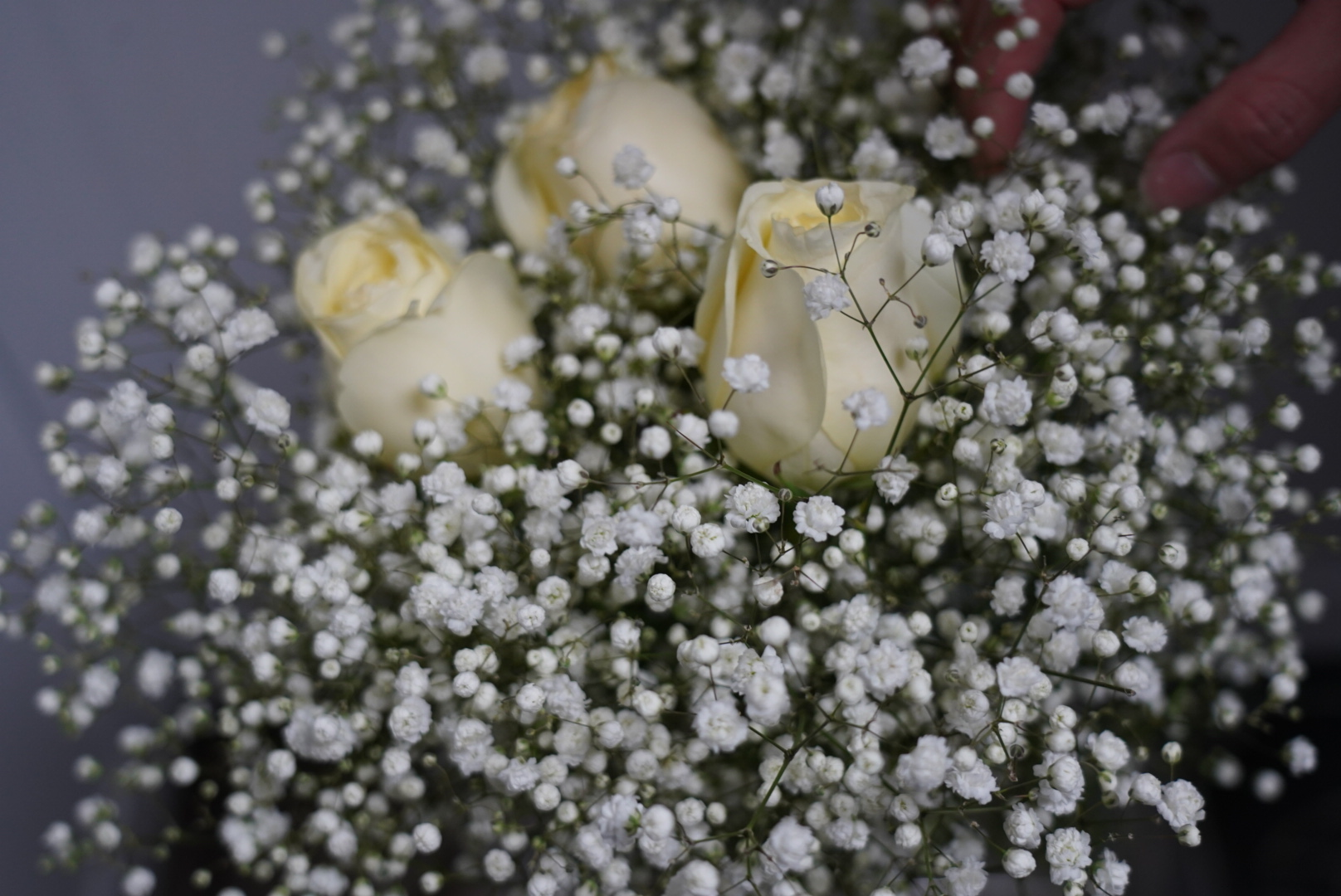 Baby's Breath and Roses