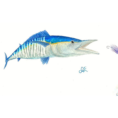 Watercolor wahoo print