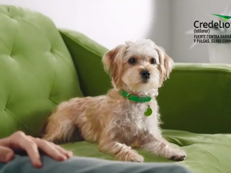 Credelio es un medicamento indicado para el tratamiento de pulgas y garrapatas en perros