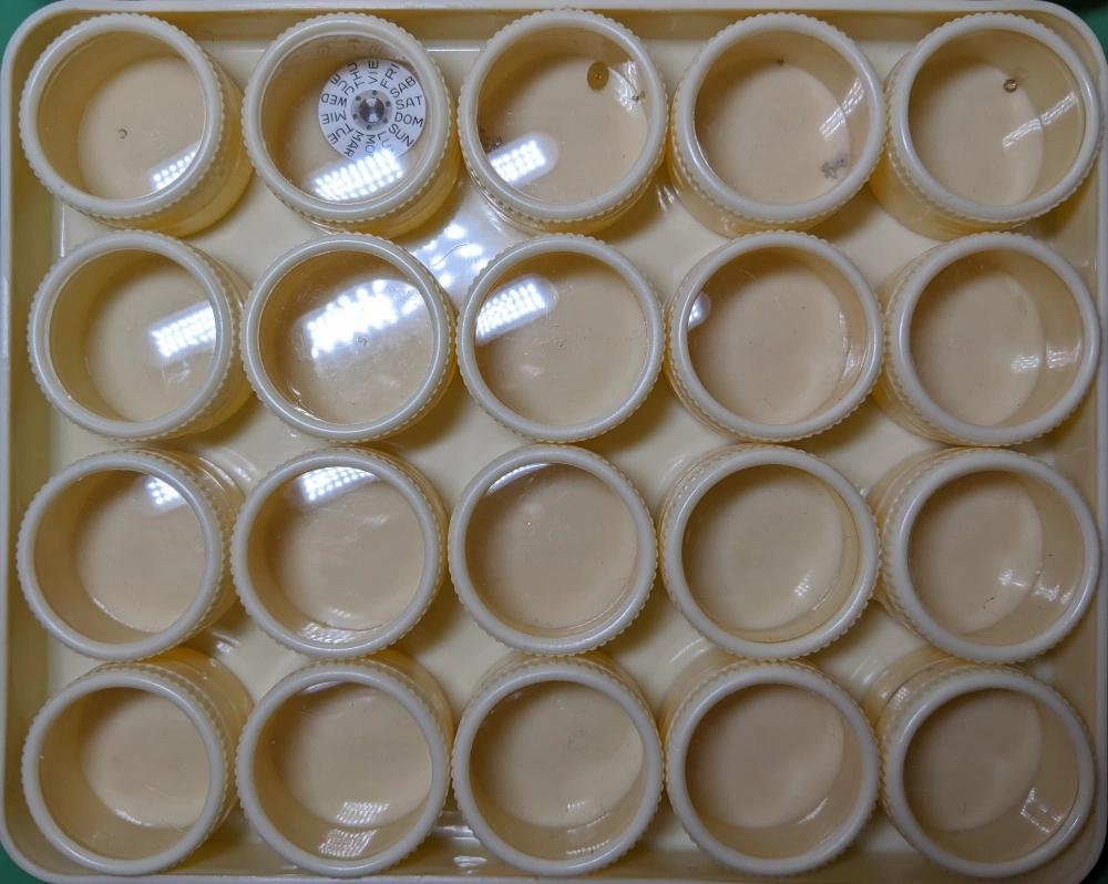 Plastic Pots in a Plastic Box
