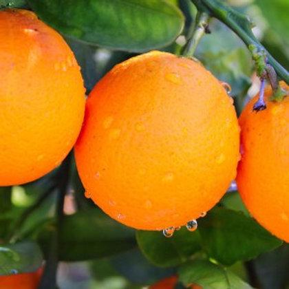 Organic Oranges - 500g