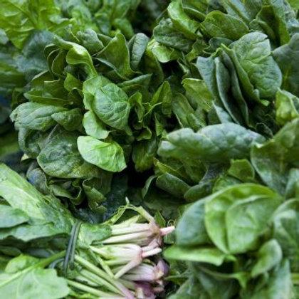 Spinach- Bunch