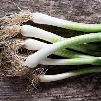 Organic Spring Onions - Bunch