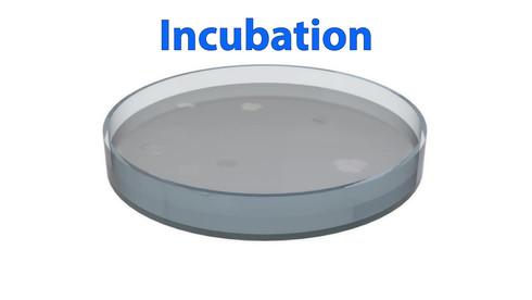 Incubating Bacteria