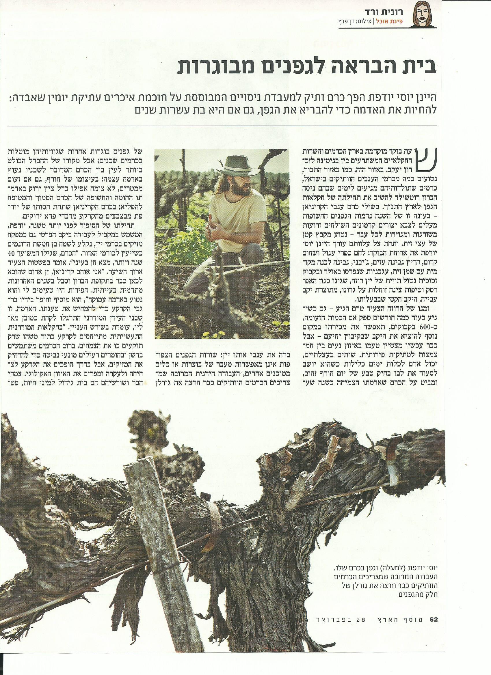 בית הבראה לגפנים מבוגרות- רונית ורד, הארץ, 28.2.14