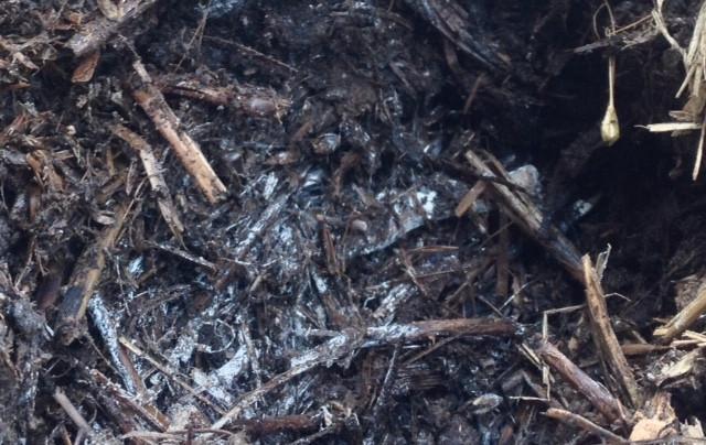 קומפוסט במהלך ייצורו, התפטיר הלבן הינו אוכלוסיות אורגניזמים המפרקים את החומר האורגני