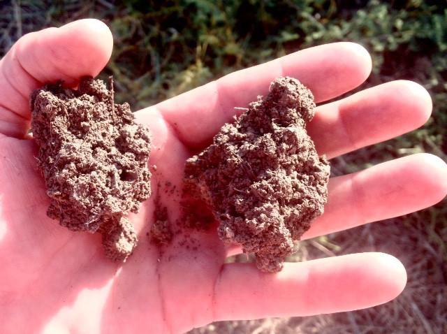 רגב אדמה, קרקע משוקמת עשירה בחומר אורגני ומאווררת