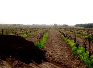 סוגית הדישון- שימור פוריות הקרקע