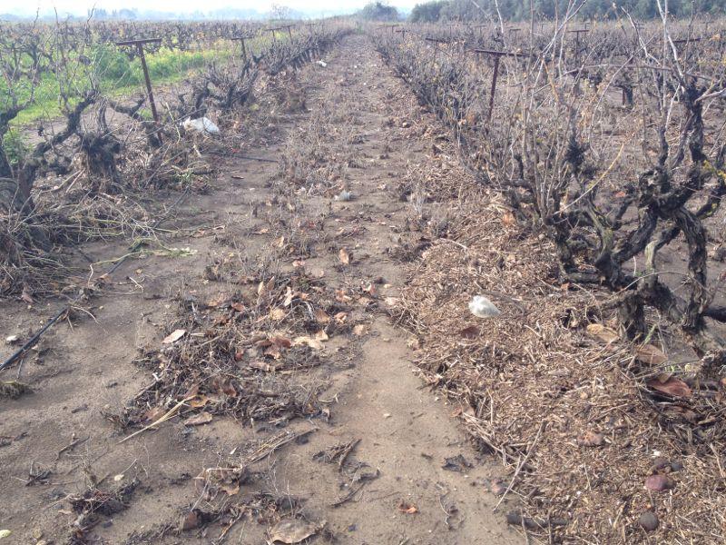 סחיפת קרקע בכרמים בשוני- ינואר 2015