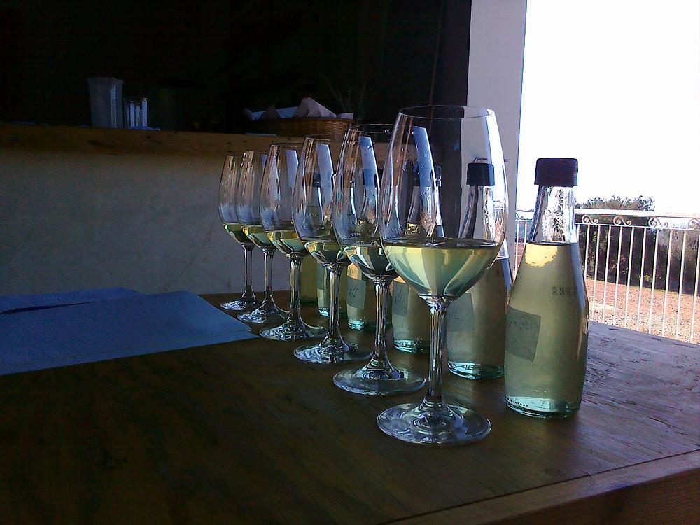 בדיקת בנטונית ביין לבן 2