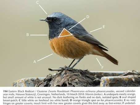 Out now: the redstart ID article!