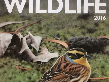 Spurn Wildlife review & Sovon Bird Festival