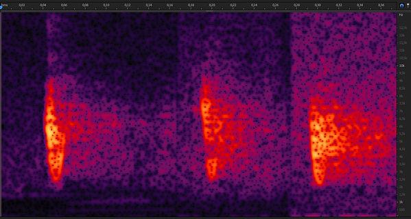 Bruine Boszanger sonogram.jpg