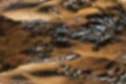 kleinst waterhoen man 09052019 nr1.jpg