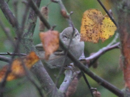 Tristis: not always a peep show