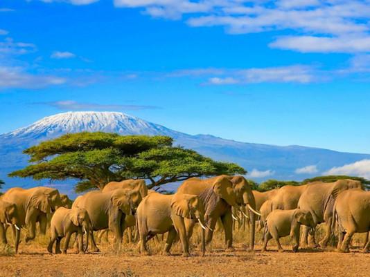 Alle falde del Kilimanjaro: un viaggio in Tanzania