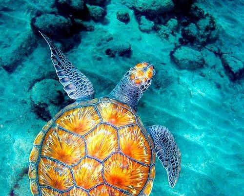 La Giornata Mondiale degli Oceani
