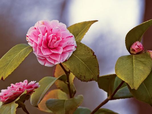 I fiori di novembre