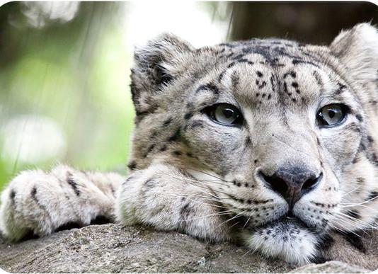 Social Distancing: curiosità sugli animali