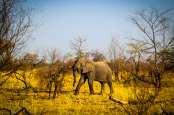 Elephant at Macatoo