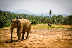 Sri Lanka - FB-3399