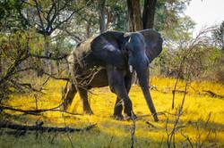 Elephant Encounter 2