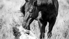 The Barefoot Horse Magazine Feature