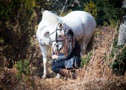 Horses-1439
