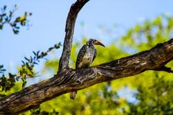 Birds of the Okavango