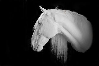 Selman horse turn bw.jpg