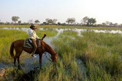 Drinking from the Okevango Delta
