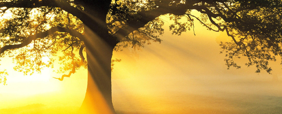 Tree-wallpaper-to-use-as-background-1.jpg