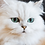 Thumbnail: Your pet prints