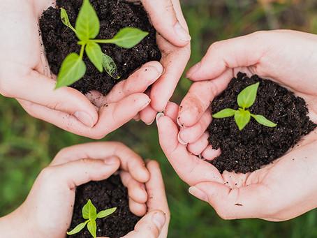 ¿Cómo podemos fomentar entre los niños el respeto al medioambiente?