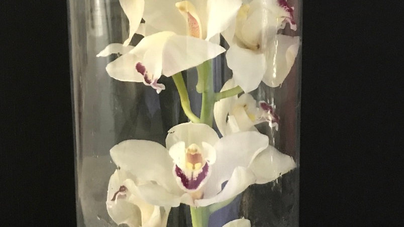 Orquídea en florero