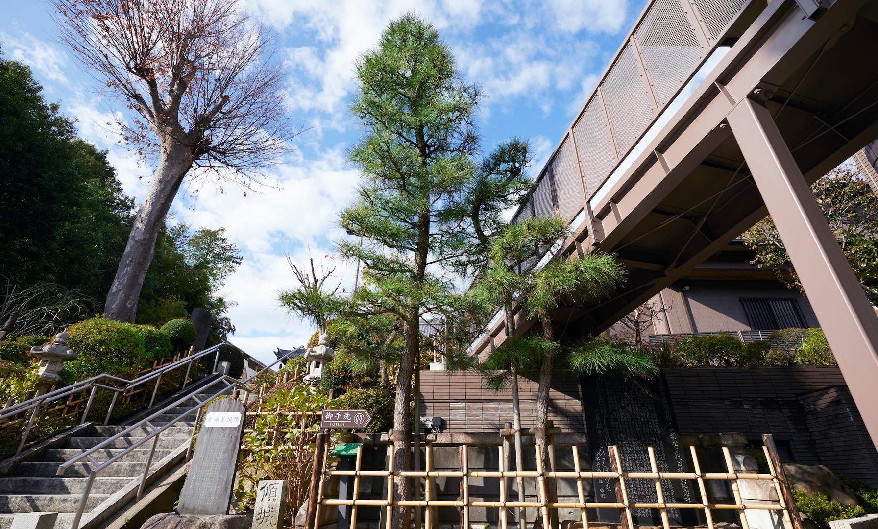 東福寺 一葉松