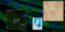 AIRC composizione 3.jpg